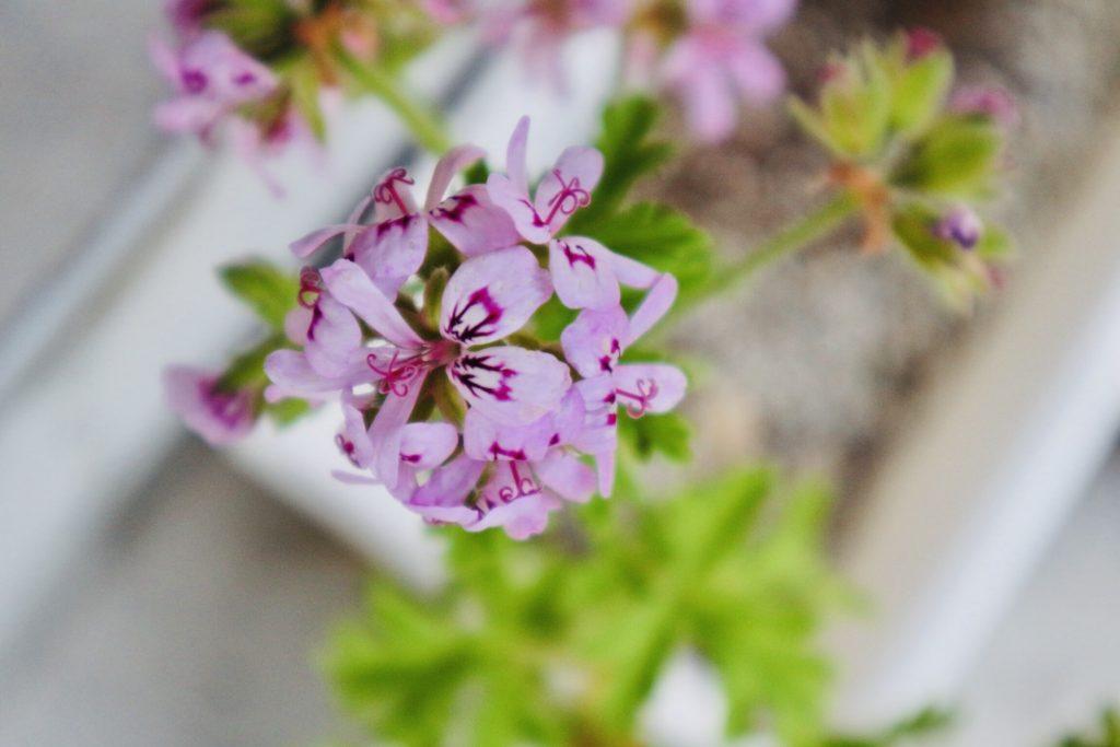 観音力&龗カードのメッセージ、今を意識して、いずれは花が咲く