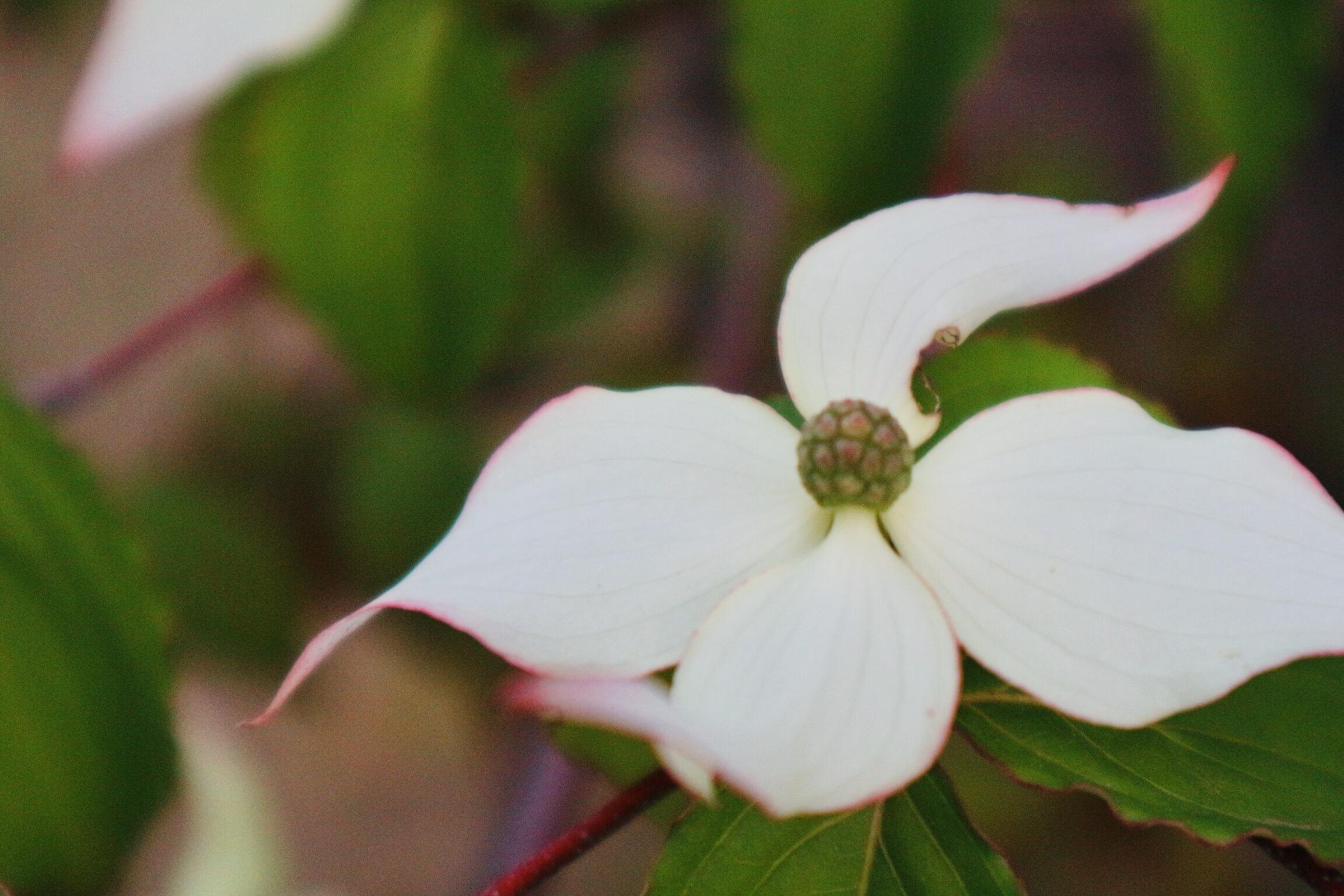 お久しぶりのお花のレッスンです。
